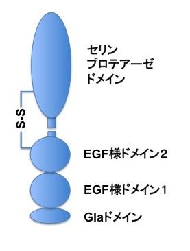 プロテインCの模式図
