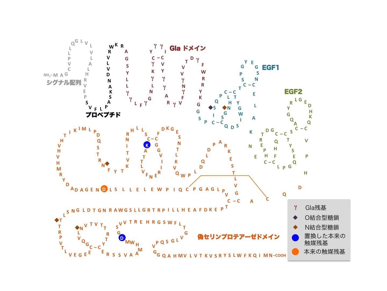 図1 プロテインZの構造