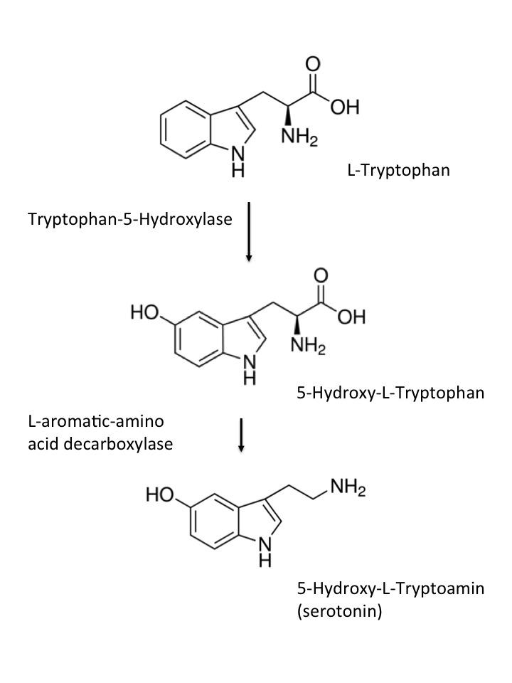 図 セロトニンの生合成