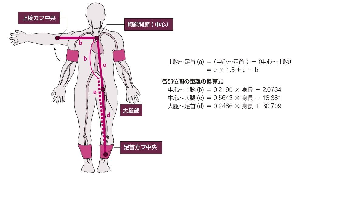 図1 baPWVの距離計算(文献5から引用)