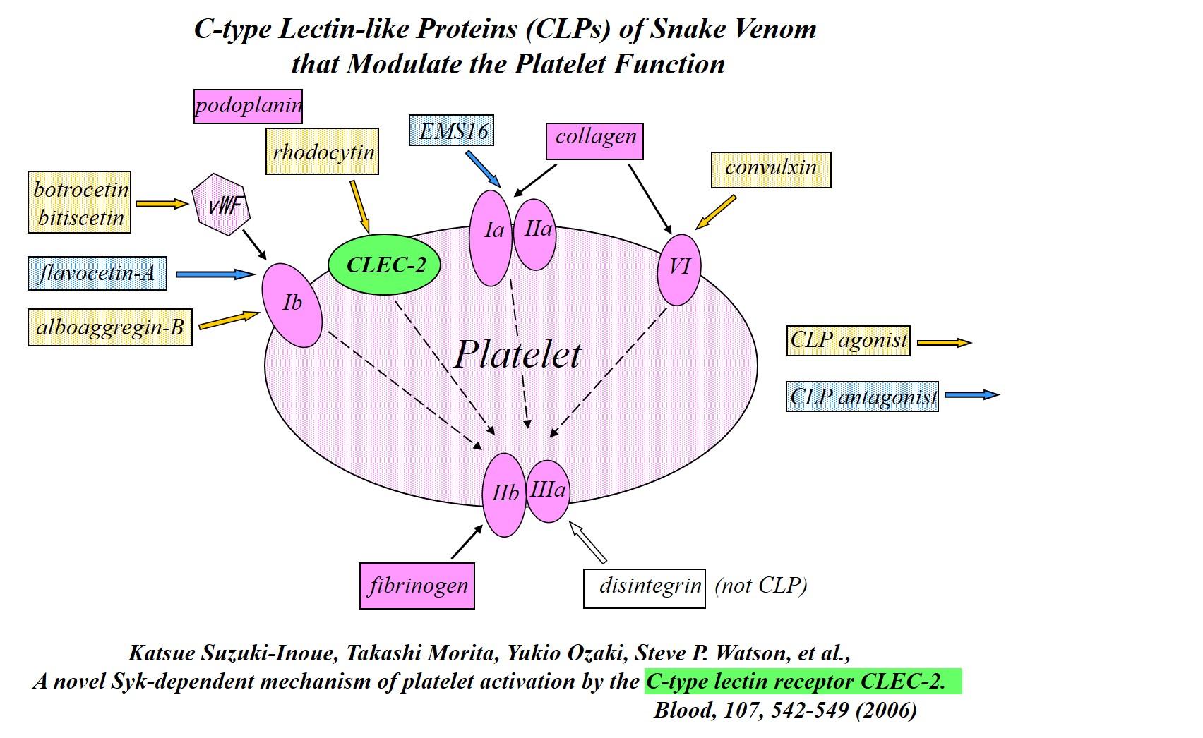 図 血小板凝集機構と血小板受容体に作用するヘビ毒タンパク