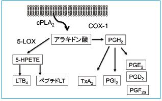 図1 アラキドン酸カスケードの概要