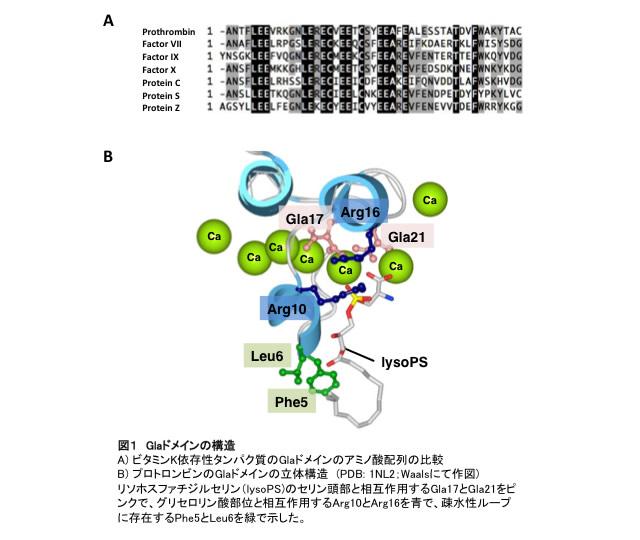 図1 Glaドメインの構造